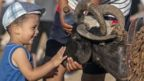 A child strokes a ram as Tunisians arrive at a livestock market ahead of the Eid al-Adha near Manouba district of Tunis, Tunisia on July 29, 2020.