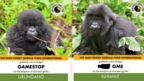 Adoption certificates for two different gorillas showing Gamestop, or their stock tag GME, as their sponsor.
