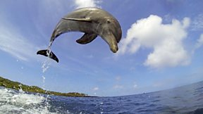 Dolphins – Spy In The Pod