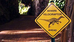 Dinosaurs, extreme weather, and lemurs on the web