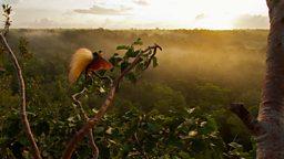 Photofilm: Attenborough's Paradise Birds