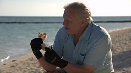 David Attenborough to present new landmark series on the Great Barrier Reef for BBC One