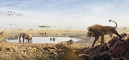 BBC Studios' Serengeti and Wild Metropolis secure global pre-sales