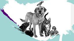 BBC Sounds for pets - April Fool