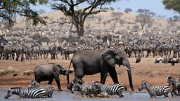 Actor John Boyega to narrate pioneering new BBC One dramatised natural history series Serengeti