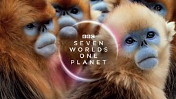Sir David Attenborough attends world premiere of new natural history blockbuster Seven Worlds, One Planet as BBC reveals broadcast date