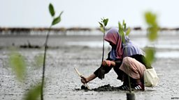 """""""Our forests, our future"""": Inspiring climate action in Indonesia"""
