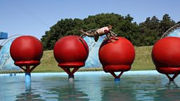 Classic Total Wipeout episodes are back on BBC One, with a twist
