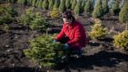 Woman touches fir tree