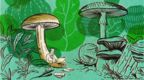 Illustrated image of man working on laptop while sat under a mushroom