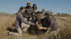 Conservationists attend to a sedated rhino (Credit: Jason Anthony Strydom/Strydogg Films)